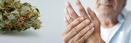 השימוש של קשישים בקנאביס ותמיכתם בלגליזציה